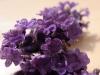 46 Lavender flowers